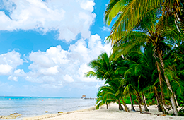 Panama Potpourri coastal view with palm trees, sand and water